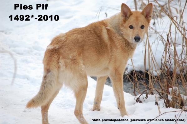 Pies Pif